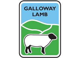 galloway-lamb